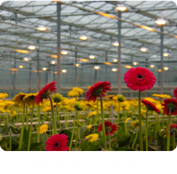 Floriculture Series
